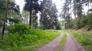 foret-chemin